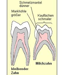 Milchzahn Schema