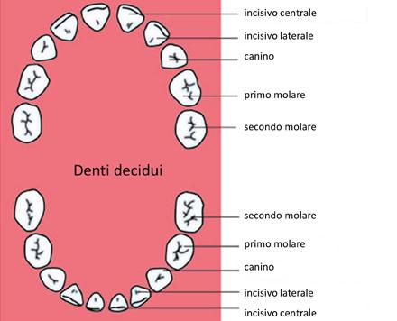 Odontoiatria pediatrica bambini denit da latte profilassi - Immagini dei denti da colorare ...